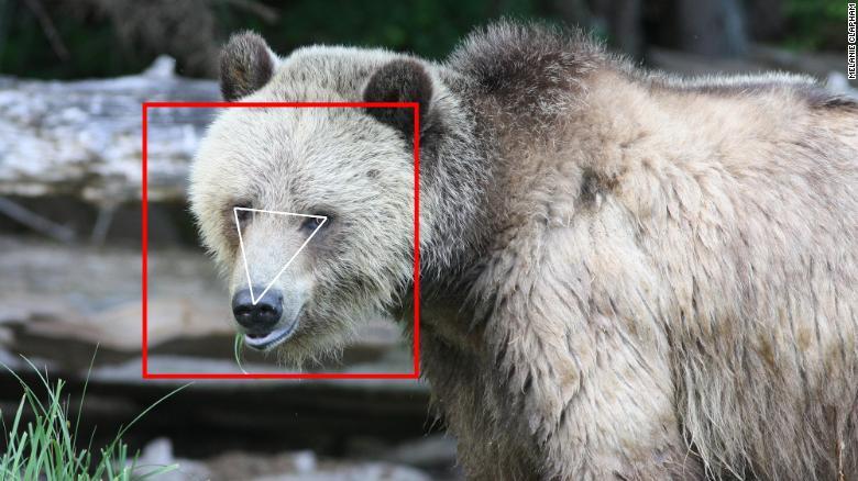 Штучний інтелект для звірів. Як створюється технологія розпізнавання тварин