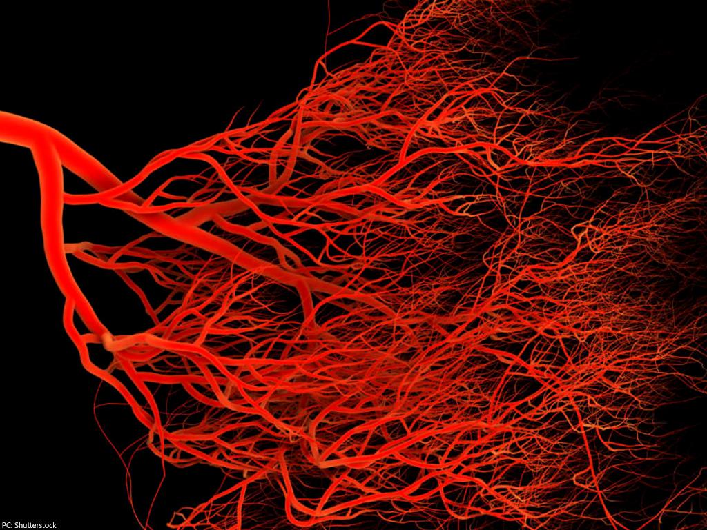 В Японії запускають метод ідентифікації особистості по кровоносних судинах
